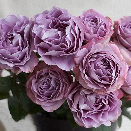 Garden Rose Lavender Bouquet