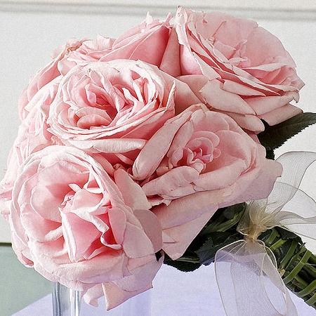 Garden Rose Pink Ohara