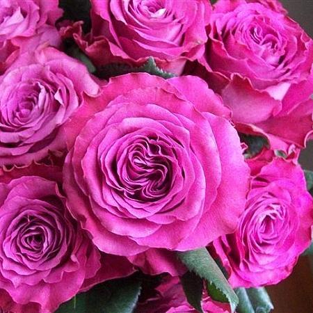 Garden Rose Precious Moments