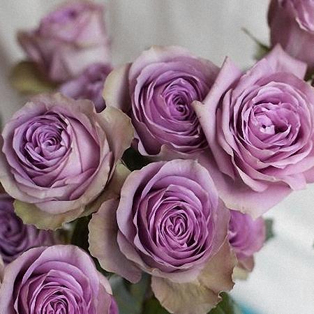 Garden Rose Tiara