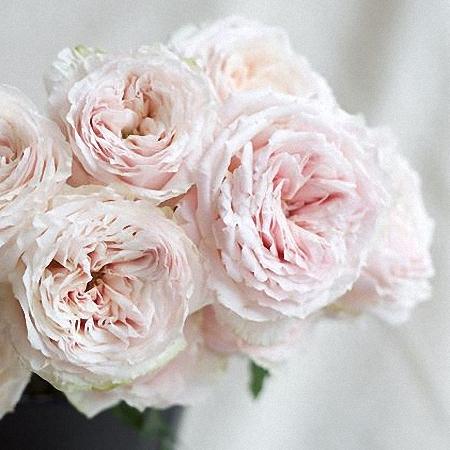 Garden Rose Wabara Tsumugi