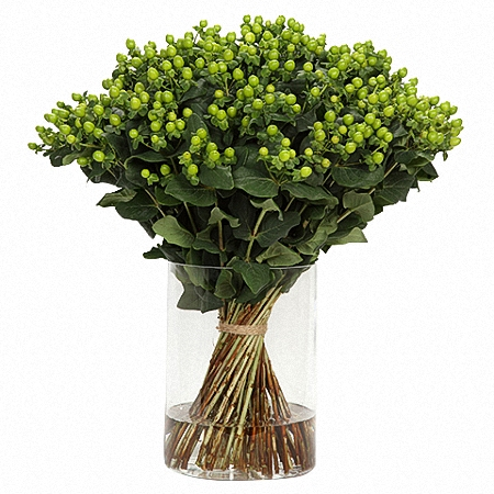 Hypericum Coco Bamboo