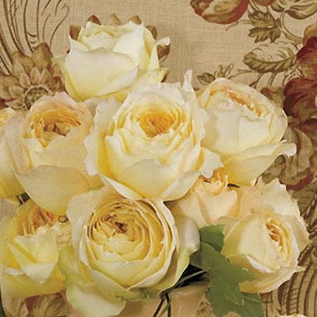 Garden Rose Caramel Antike